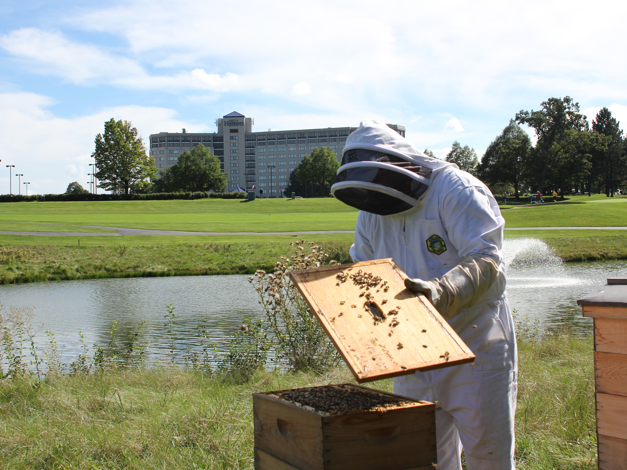 LOCAL AND SUSTAINABLE AT THE HOTEL OF BEES
