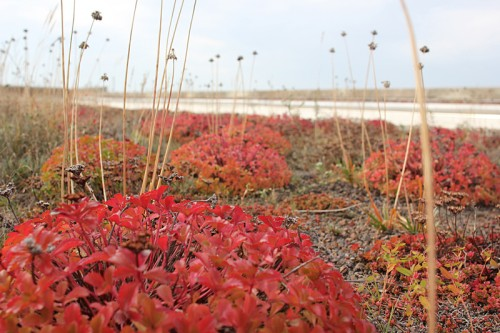 Prairie patch on the roof