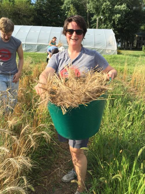 Harvesting at Hazzard Free Farm, 2015