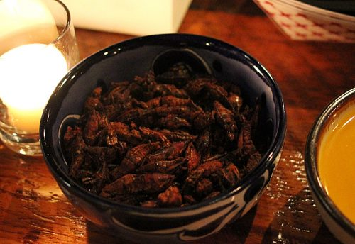 Chapulines, a popular Oaxacan bar snack