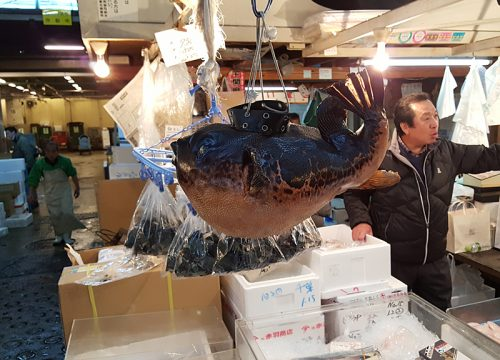 Fugu (blowfish) at the Tsukiji fish market